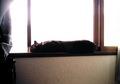 necobitter『日めくり猫ら』まとめ 2011年2月分izon5502