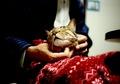 necobitter『日めくり猫ら』まとめ 2011年2月分klasse_s1
