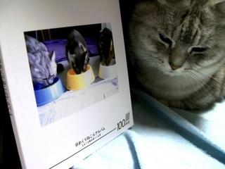 カメラのキタムラで100ページ猫らフォトブック作ったぞー1
