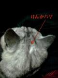 日めくり猫ら番外編まとめ 2011年2月分2
