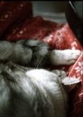 necobitter『日めくり猫ら』まとめ 2011年2月分penf1