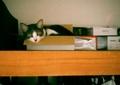 necobitter『日めくり猫ら』まとめ 2011年3月分agat18k