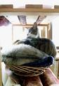 necobitter『日めくり猫ら』まとめ 2011年3月分agfa830s-1