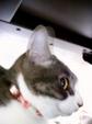 necobitter『日めくり猫ら』まとめ 2011年3月分agfa830s-2
