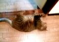 necobitter『日めくり猫ら』まとめ 2011年3月分agfa830s-3