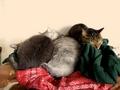 necobitter『日めくり猫ら』まとめ 2011年3月分agfa830s-4