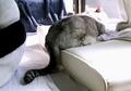 necobitter『日めくり猫ら』まとめ 2011年3月分agfa830s-5