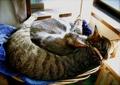 necobitter『日めくり猫ら』まとめ 2011年3月分agfa830s-6