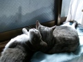 necobitter『日めくり猫ら』まとめ 2011年3月分afa830s-7