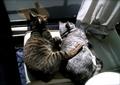 necobitter『日めくり猫ら』まとめ 2011年3月分agfa830s-8