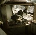 necobitter『日めくり猫ら』まとめ 2011年3月分dianamini