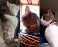 necobitter『日めくり猫ら』まとめ 2011年3月分e520-1