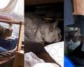 necobitter『日めくり猫ら』まとめ 2011年3月分e520-2