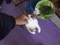 necobitter『日めくり猫ら』まとめ 2011年3月分e520-4