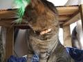 necobitter『日めくり猫ら』まとめ 2011年3月分e520-5