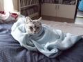 necobitter『日めくり猫ら』まとめ 2011年3月分e520-6