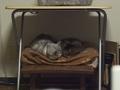 necobitter『日めくり猫ら』まとめ 2011年3月分e520-7