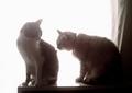 necobitter『日めくり猫ら』まとめ 2011年3月分izone550-1