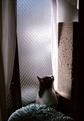 necobitter『日めくり猫ら』まとめ 2011年3月分klasses-1