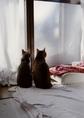 necobitter『日めくり猫ら』まとめ 2011年3月分klasses-2