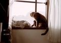 necobitter『日めくり猫ら』まとめ 2011年3月分klasses-3