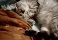 necobitter『日めくり猫ら』まとめ 2011年3月分klasses-4