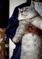 necobitter『日めくり猫ら』まとめ 2011年3月分klasses-5