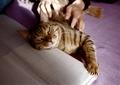 necobitter『日めくり猫ら』まとめ 2011年3月分klasses-6