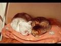 necobitter『日めくり猫ら』まとめ 2011年3月分klasses-7