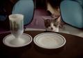 necobitter『日めくり猫ら』まとめ 2011年3月分klasses-8