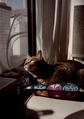 necobitter『日めくり猫ら』まとめ 2011年3月分klasses-9