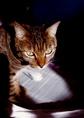 necobitter『日めくり猫ら』まとめ 2011年3月分penf-1