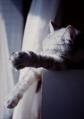 necobitter『日めくり猫ら』まとめ 2011年3月分penf-2