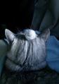 necobitter『日めくり猫ら』まとめ 2011年4月分agfa830s1