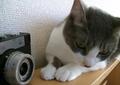 necobitter『日めくり猫ら』まとめ 2011年4月分agfa830s2