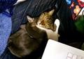 necobitter『日めくり猫ら』まとめ 2011年4月分agfa830s3