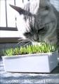 necobitter『日めくり猫ら』まとめ 2011年4月分agfa830s4