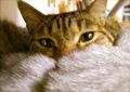 necobitter『日めくり猫ら』まとめ 2011年4月分agfa830s5