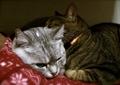 necobitter『日めくり猫ら』まとめ 2011年4月分agfa830s6