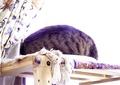necobitter『日めくり猫ら』まとめ 2011年4月分agfa830s7