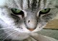 necobitter『日めくり猫ら』まとめ 2011年4月分agfa830s9