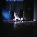 necobitter『日めくり猫ら』まとめ 2011年4月分dianamini2