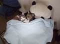 necobitter『日めくり猫ら』まとめ 2011年4月分e-520_1