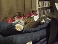 necobitter『日めくり猫ら』まとめ 2011年4月分e-520_2