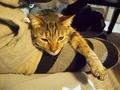 necobitter『日めくり猫ら』まとめ 2011年4月分e-520_3