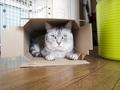 necobitter『日めくり猫ら』まとめ 2011年4月分e-520_5