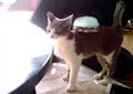 necobitter『日めくり猫ら』まとめ 2011年4月分izone550_1
