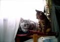 necobitter『日めくり猫ら』まとめ 2011年4月分izone550_2