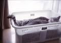 necobitter『日めくり猫ら』まとめ 2011年4月分klasse s_1