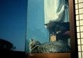 necobitter『日めくり猫ら』まとめ 2011年4月分klasse s_4